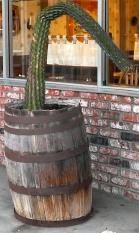 moffettcactus